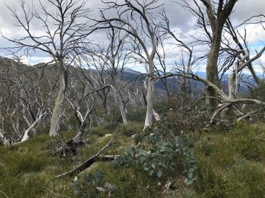 4. Mt Spec trees